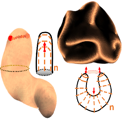 Morphology of active deformable 3D droplets published in Physical Review X